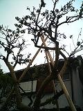 20100522-s-PICT0023.jpg