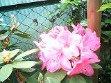 20100522-s-PICT0026.jpg